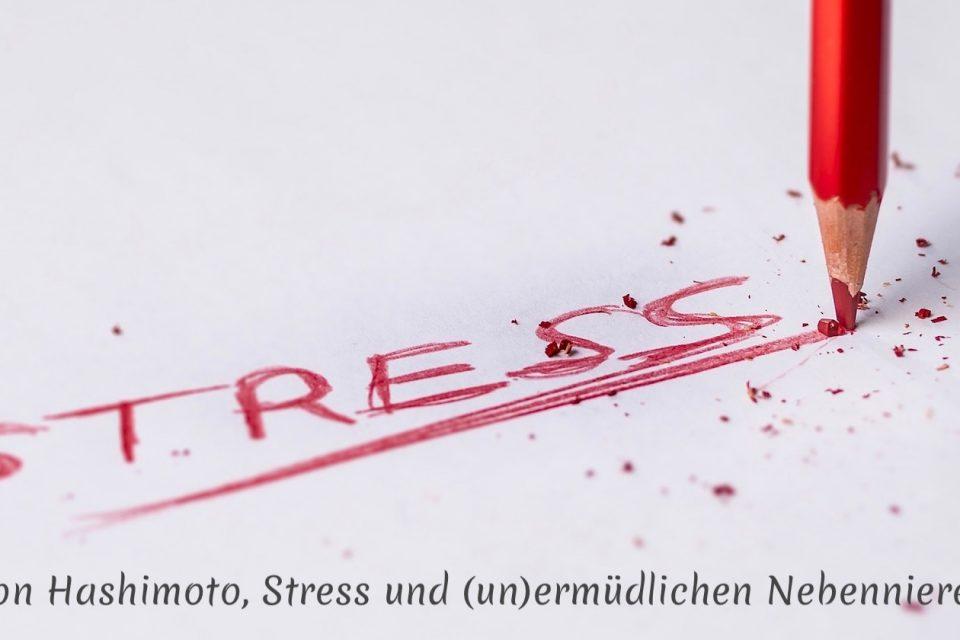 Von Hashimoto, Stress und (un)ermüdlichen Nebennieren